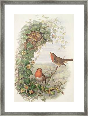 Robin Framed Print by John Gould