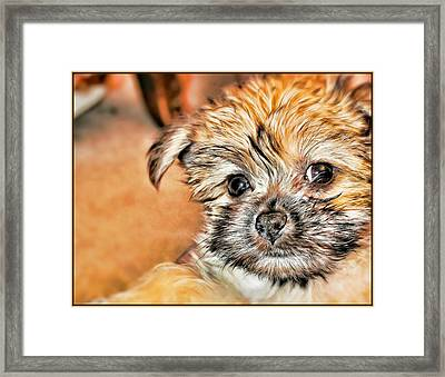 Framed Print featuring the photograph Robin by Mindy Newman