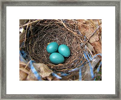 Robin Nest Framed Print by Melissa Parks