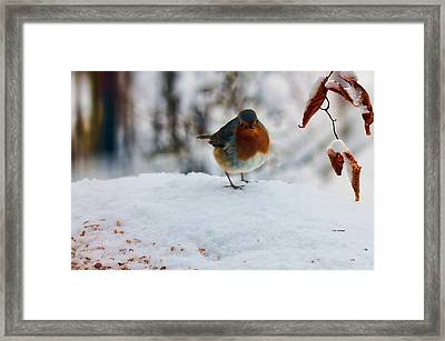 Framed Print featuring the photograph Robin Redbreast by Valerie Anne Kelly
