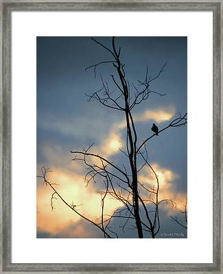 Framed Print featuring the photograph Robin Watching Sunset After The Storm by Sandi OReilly