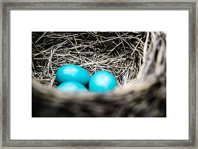 Robin's Eggs Framed Print by Shelby  Young