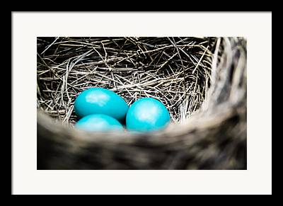 Eggs Photographs Framed Prints
