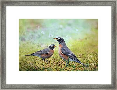 Robins, Heralds Of Spring Framed Print by Bonnie Barry