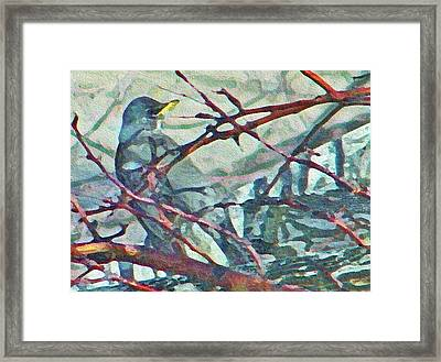 Robins Impression Of Spring Framed Print