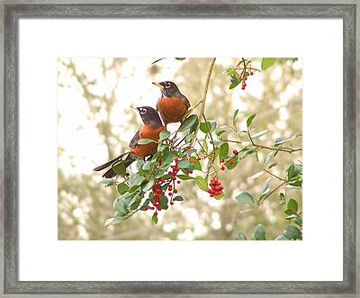 Robins In Holly Framed Print