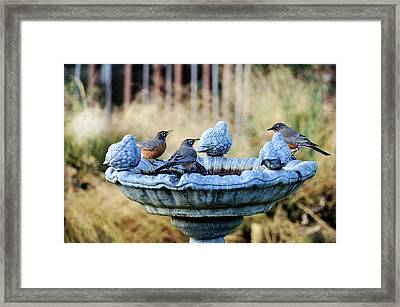 Robins On Birdbath Framed Print