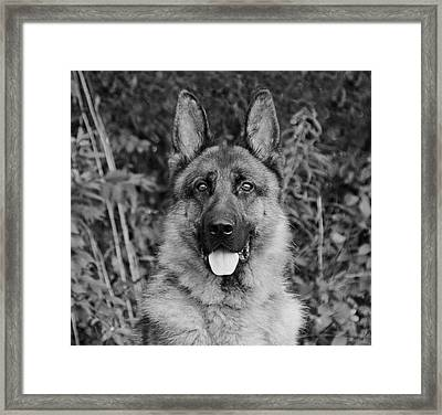 Framed Print featuring the photograph Rocco - Bw by Sandy Keeton