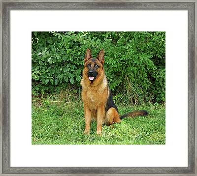 Framed Print featuring the photograph Rocco Sitting by Sandy Keeton