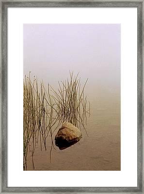 Rock And Reeds On Foggy Morning Framed Print