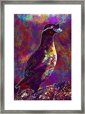 Rock Bird Auklet Crested Birds  Framed Print