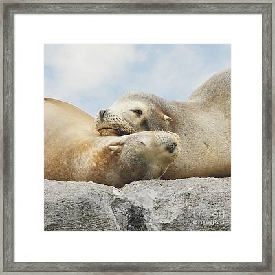 Framed Print featuring the photograph Rock Buddies by Roy  McPeak
