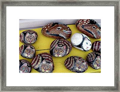 Rock Cats And Fawns Framed Print by Barbara Griffin