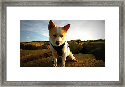 Rock Climbing Rocko Framed Print by Mandy Shupp