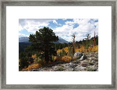 Rock Creek Shrub Aspens Eastern Sierra Framed Print