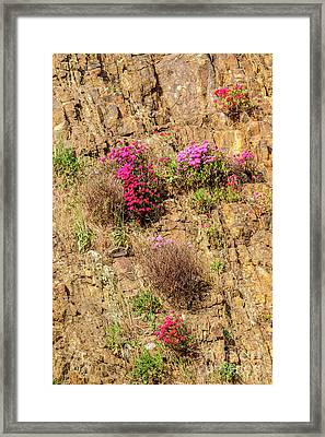 Rock Cutting 1 Framed Print by Werner Padarin