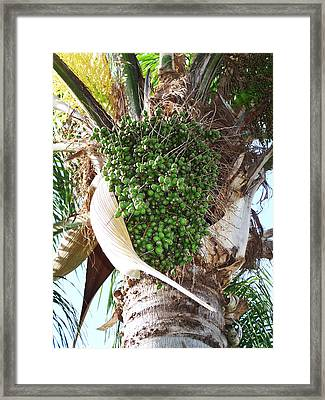 Rock Me Gently Framed Print by Evelyn Patrick