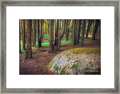 Rock On Woods Framed Print by Carlos Caetano