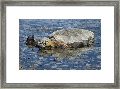 Framed Print featuring the photograph Rock Pillow by Pamela Walton
