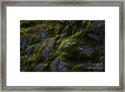 Rock With Green  Framed Print by Barbara Schultheis
