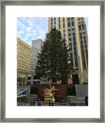 Rockefeller Center Christmas Tree Framed Print