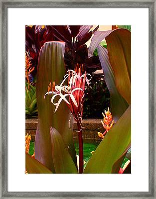 Rockefeller Fleur In Nyc Framed Print