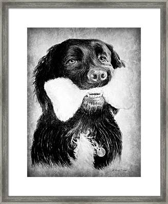 Rockie Framed Print by Andrew Read
