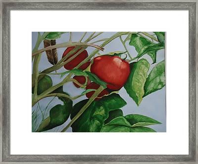 Rockin Robin Framed Print