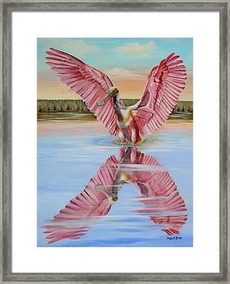 Rockport Roseate Spoonbill Framed Print by Phyllis Beiser
