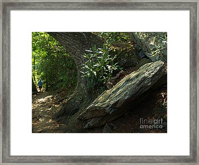 Rocks And Rhododendron At Chimney Rock Framed Print