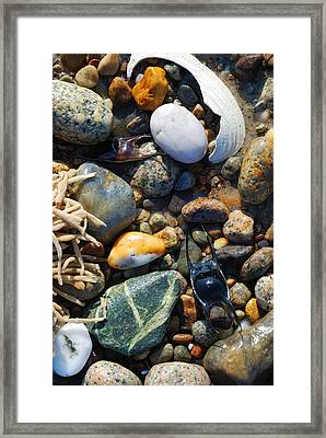 Rocks And Shells Framed Print by Charles Harden