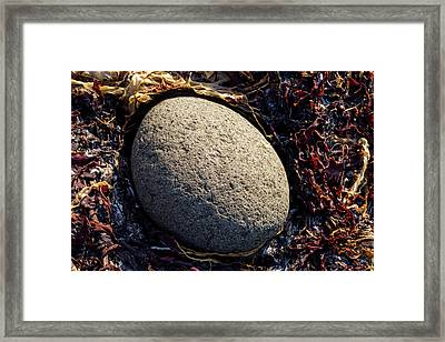 Rocks From Talisker Beach 4 Framed Print by Davorin Mance