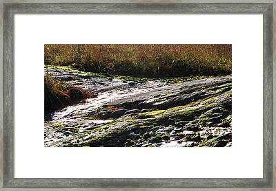 Rocks Moss And Grass 2  Framed Print by Lyle Crump