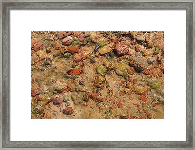 Rocky Beach 5 Framed Print by Nicola Nobile