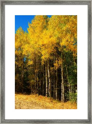 Rocky Mountain Aspen Color Framed Print by James BO  Insogna