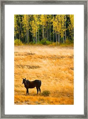 Rocky Mountain Autumn Graze Framed Print by James BO  Insogna