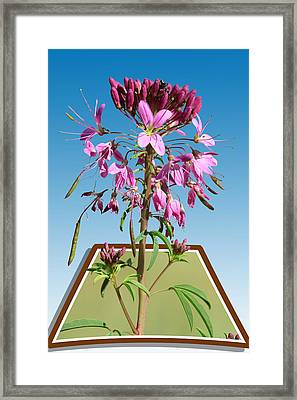 Rocky Mountain Bee Plant Framed Print
