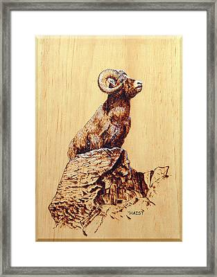 Rocky Mountain Bighorn Sheep Framed Print by Ron Haist
