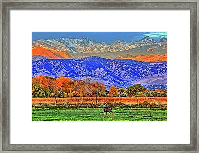 Framed Print featuring the photograph Rocky Mountain Deer by Scott Mahon