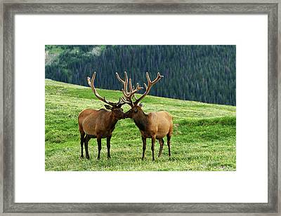 Framed Print featuring the photograph Rocky Mountain Elk 2 by Marie Leslie