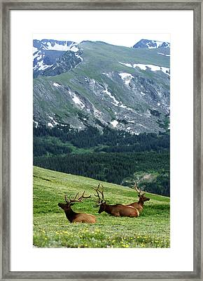 Framed Print featuring the photograph Rocky Mountain Elk 5 by Marie Leslie
