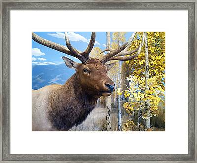 Rocky Mountain Elk Framed Print by Karon Melillo DeVega