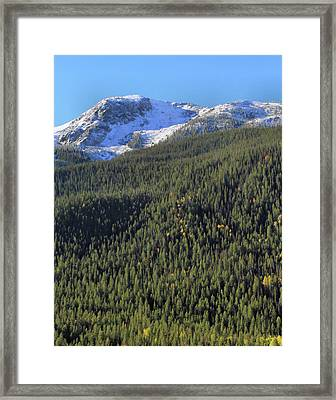 Framed Print featuring the photograph Rocky Mountain Evergreen Landscape by Dan Sproul