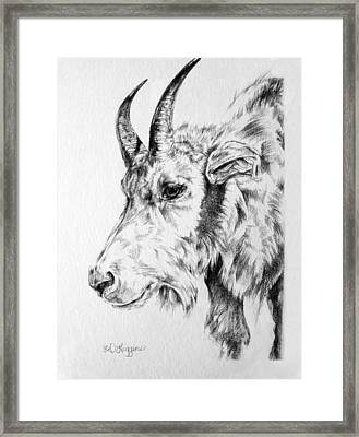Rocky Mountain Goat Framed Print by Derrick Higgins