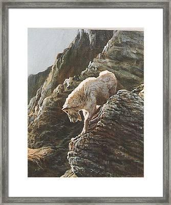 Rocky Mountain Goat Framed Print by Steve Greco