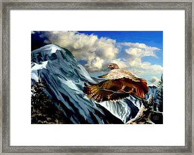Rocky Mountain Hawk Framed Print by Ron Chambers