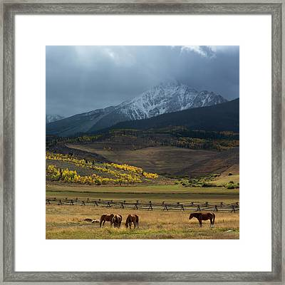 Framed Print featuring the photograph Rocky Mountain Horses by Aaron Spong