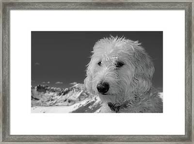 Rocky Mountain Labradoodle Framed Print by Cary Leppert
