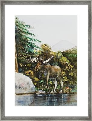 Rocky Mountain Moose Framed Print