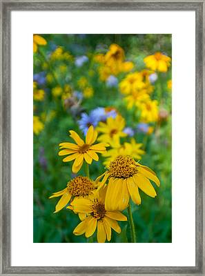 Framed Print featuring the photograph Rocky Mountain Wildflowers by Cascade Colors